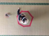 猫ねこ動画